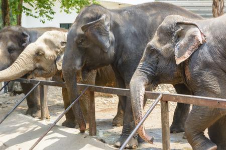 sympathize: Friendly elephant in Thailand Stock Photo