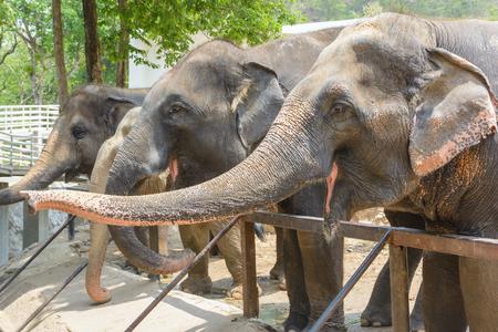 Elephant family in Thailand Stock Photo