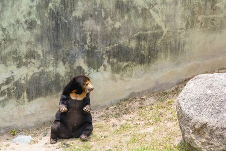sympathize: Brown bear in a park