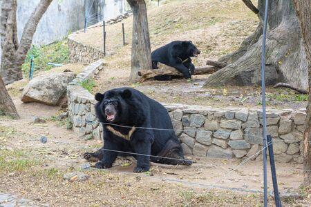 sympathize: Black bear in a park