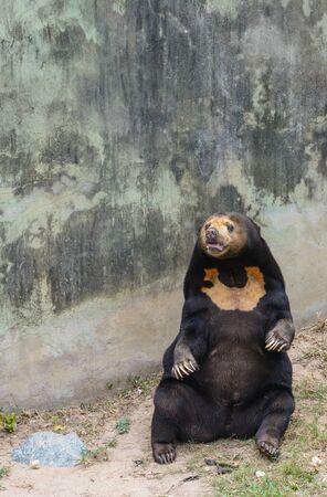 Pretty brown bear