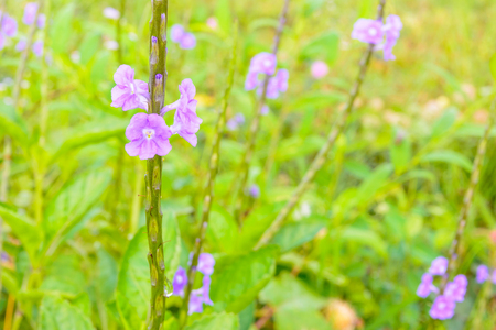 small purple flower: Small purple flower blooming in forest Stock Photo
