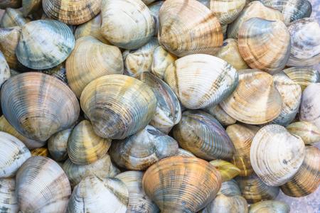 shellfish: Shellfish for cook a seafood