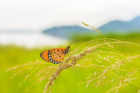 carpel: Brown butterfly on flower with mountain background Stock Photo