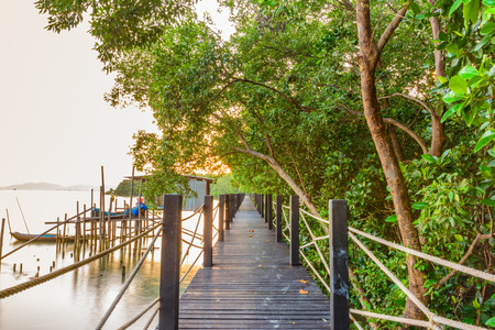 Walkway in mangrove forest