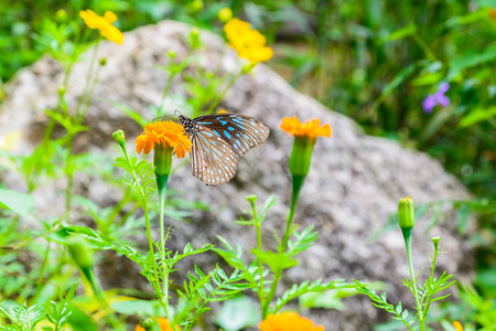 Blue butterfly on flower Stock Photo
