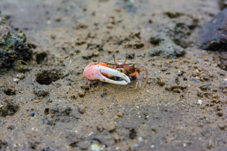 Small crab on the beach. Nature and out door animal background Stock fotó