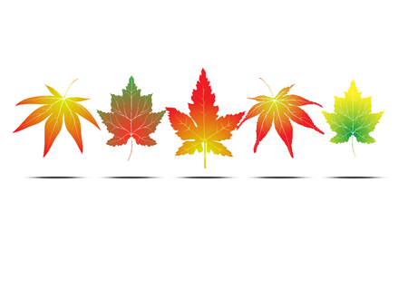 Maple leaf collection. Leaf in winter and autumn season. Vector EPS10