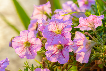 Pink flower in flower pot with sunlight background