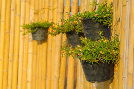 Flower pot holding on bamboo wall background. Garden design and decoration