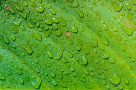 Droplet on green leaf background. Abstract nature pattern background