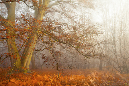 autumn forest: Autumn Forest
