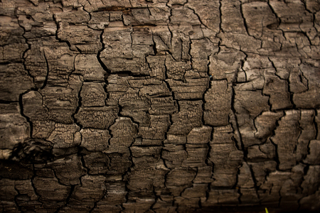burnt: Wood texture background close up. Burnt wood, charcoal Stock Photo
