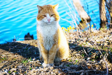 Red cat sitting Stock Photo