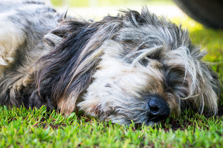 Muzzle of a dog sleeping on the grass