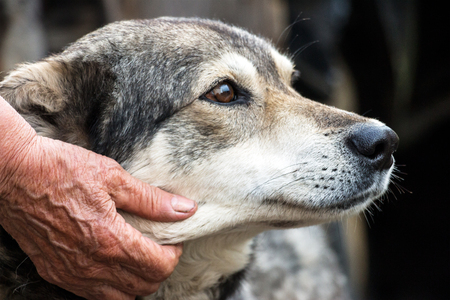 soltería: Portrait of a dog mongrel with the hand of the owner. Friendship between dog and man Foto de archivo