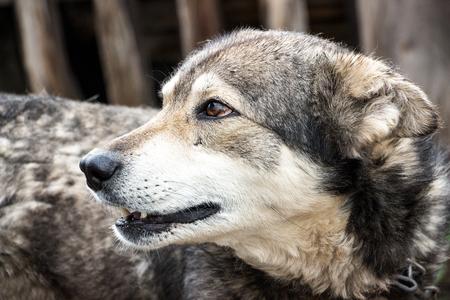 singleness: Portrait of a dog mongrel. The dog looks away Stock Photo