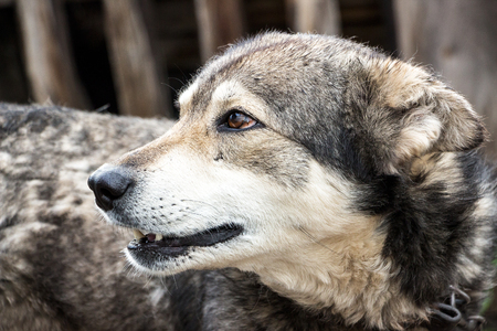 soltería: Retrato de un perro mestizo. El perro mira a otro lado