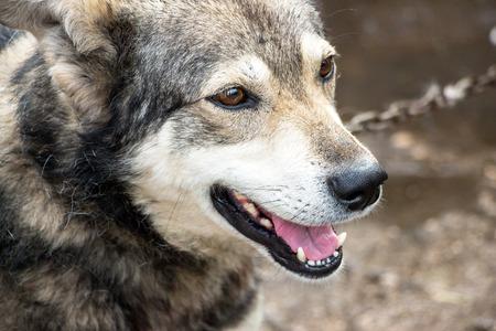 soltería: Portrait of a dog mongrel. A dog with an open mouth Foto de archivo