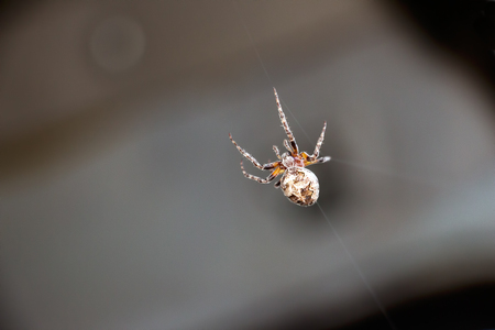 A small spider on a dark background