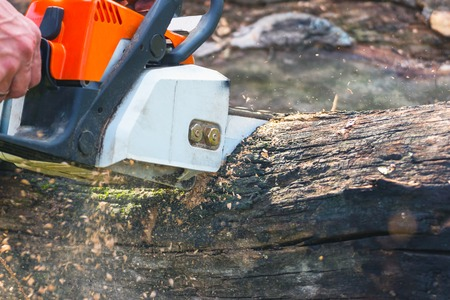 fallen tree: A man is sawing a chain saw dry trunk