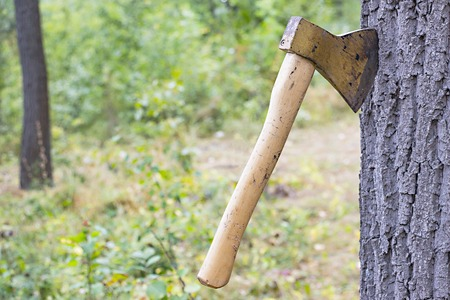 Ax thrust into the trunk of a tree in the forest Stock Photo