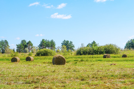 Round straw bales in a meadow. Countryside landscape Stock Photo
