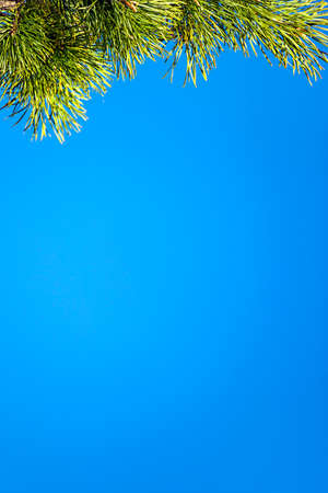Pine branch on a background of blue sky. Selective focus