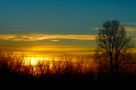 Beautiful Sunset. Blue sky, setting sun and the outline of the tree. Stock Photo