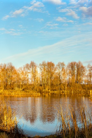 Landscape in yellow autumn colours. Forest lake in yellowed woods