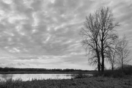 Silhouette of tree without leaves on the lake. Black and white photo
