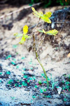 Young oak seedling grown in the forest Stockfoto