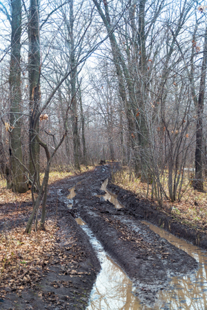Dirty autumn road in a deserted forest