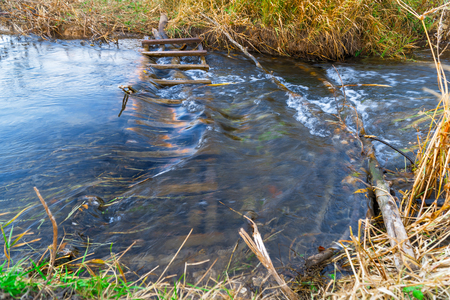 Little river in the autumn. Water flows in a small river. Water flows through a wooden obstacle Imagens