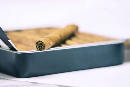 Box of cigarillos on a white background. On the box is one cigarillo. Selective focus. Close up