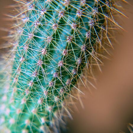 The body of a green cactus with protruding needles. Selective focus 版權商用圖片