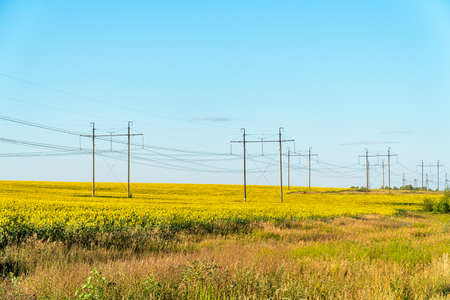 Field with yellow sunflowers and a high-voltage transmission electric line