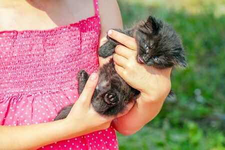 Black kitten in the arms of a girl in a red dress