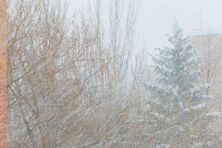 Falling snow on the background of trees. Winter background. Soft focus