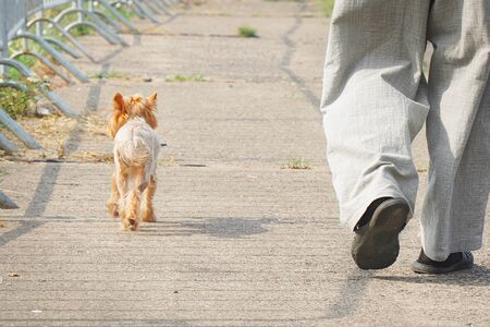 A small dog walks next to the owner. Dog at the feet of the owner