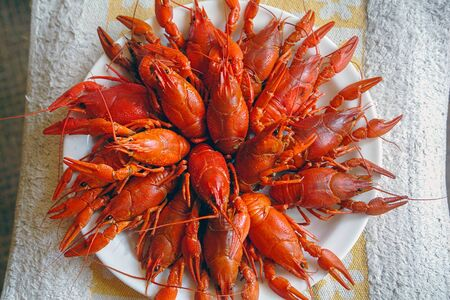 Boiled freshwater red crayfish on a plate