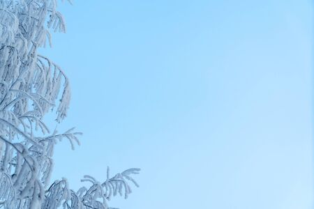 White Christmas frost on the branches of a birch on blue sky background Archivio Fotografico
