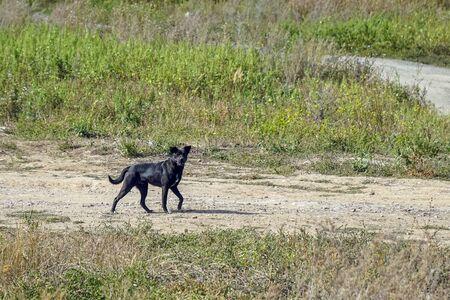 Black dog on the path among the grass