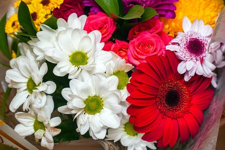 A beautiful bouquet of red gerberas, white chrysanthemums and red roses. Background of flower