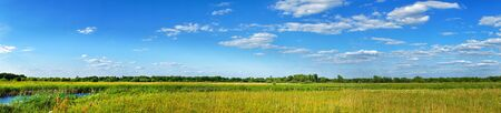 Panorama of a summer meadow against a blue sky with clouds. Summer landscape