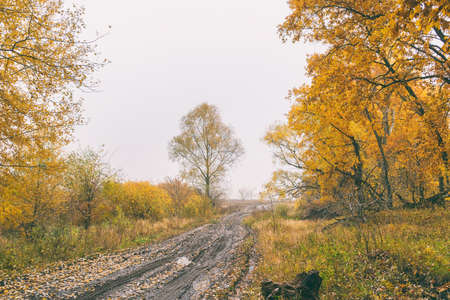 Dirt road in the autumn forest. Autumn landscape. Yellow leaves on trees and on a wet dirt road