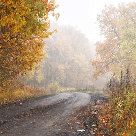 Morning autumn fog over a dry beautiful yellow-orange forest and forest country path.