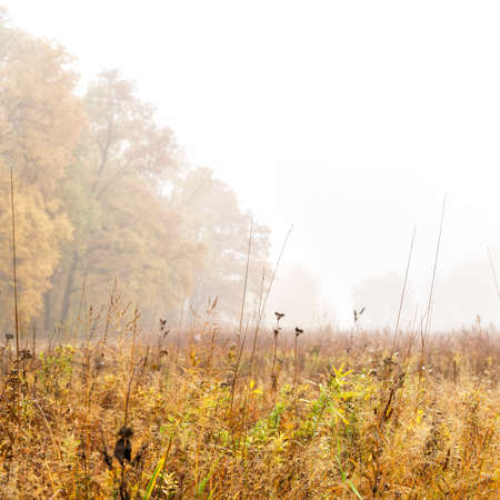 Morning autumn fog over a dry yellow meadow and forest in a fog. Autumn landscape with fog