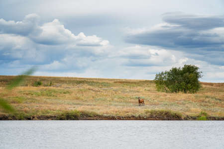 A beautiful brown horse grazing on the lake shore against a cloudy sky. Rural landscape