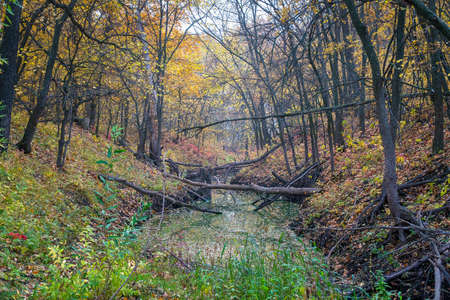 A small ravine in a quiet autumn forest, filled with water. Zdjęcie Seryjne